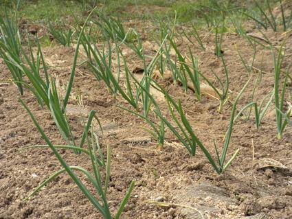 その2 「春野菜植え付けへ準備開始」