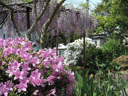 その7 「花ざかりの庭と虫たちの異変」