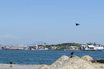 写真 八代港(内港) から見る白島