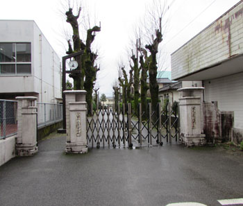 写真②人吉市立第一中学校の校門と並木
