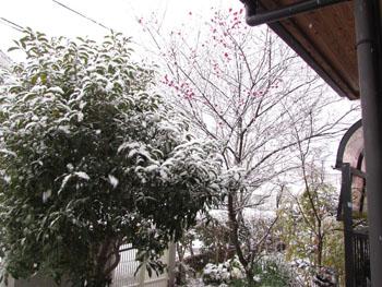 写真 雪景色