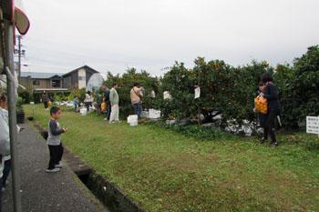 写真④蜜柑畑