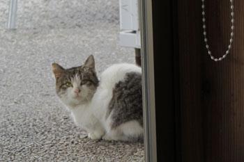 写真⑤道の駅むなかたで見かけた野良猫