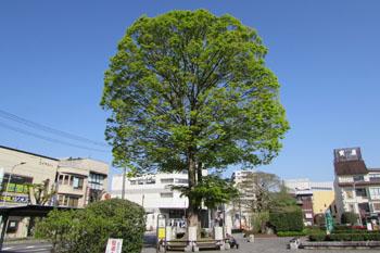 写真 今、若葉の季節