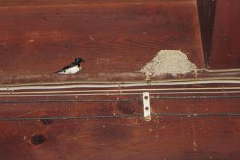 写真③燕と巣
